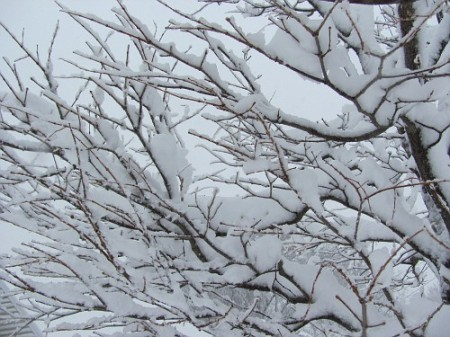 By me, winter 2011
